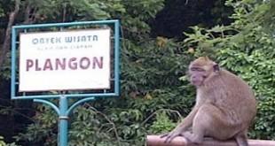 PLANGON-CIREBON